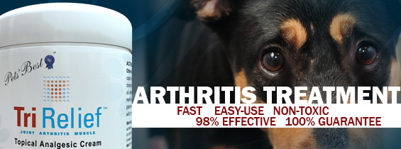 pet arthritis treatment header