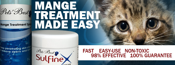 Non toxic Cat Mange Treatment header